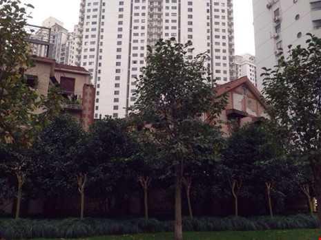 heo trang Sina (Trung Quốc), trong phong thủy nhà ở, dương trạch và âm trạch đều rất coi trọng long mạch. Nhà nằm trên long mạch thì vận thế của chủ nhân vô cùng có lợi.